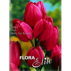 Tulipan Merry Go Round