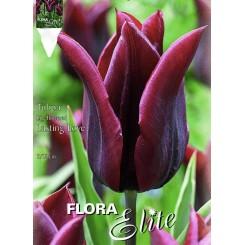 Tulipan Lasting Love