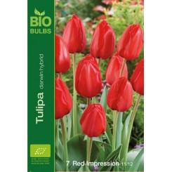 Tulipan Red Impression, Øko
