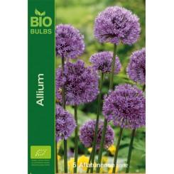 Allium Aflatunense, Øko
