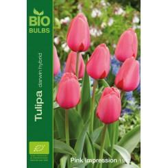 Tulipan Pink Impression, Øko