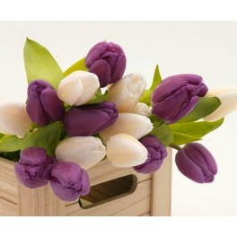 Tulipanblanding Purple Cream Symphony