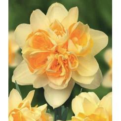 Dobbelt Påskelilje Peach Cobbler