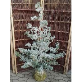 Cedertræ med sne h150