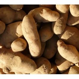 Asparges Læggekartofler