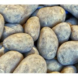 Bintje Læggekartofler
