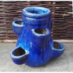 Jordbærkrukke, Blå*