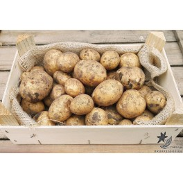 Solist Læggekartofler, Øko