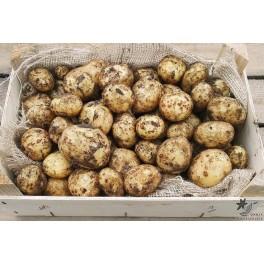 Anouk Læggekartofler