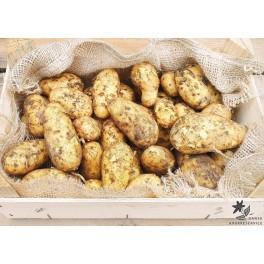 Allians Læggekartofler