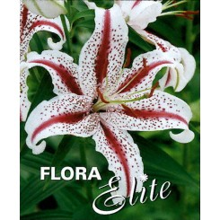 Lilium orientale, Dizzy