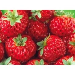 Jordbær, Hindbærjordbær (Framberry)