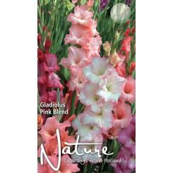 Gladiolus Pink Blend